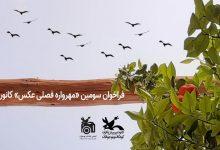 Photo of فراخوان سومین «مهرواره فصلی عکس» کانون منتشر شد