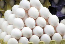 Photo of بازگشت قیمت تخم مرغ به نرخ مصوب تا دو روز آینده