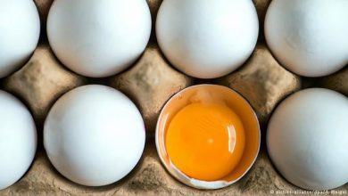 تصویر صادرات تخم مرغ متوقف شد/ هر شانه؛ ۳۰ هزار تومان