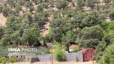 تصویر رفع تصرف ۱۳ هکتار از اراضی جنگلی منطقه بابلکنار