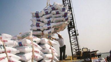 تصویر ممنوعیت واردات برنج برداشته شد/ دپوی ۲۰۰ هزار تن برنج در گمرکات