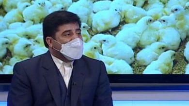 تصویر خودکفایی آذربایجان شرقی در تولید گوشت مرغ