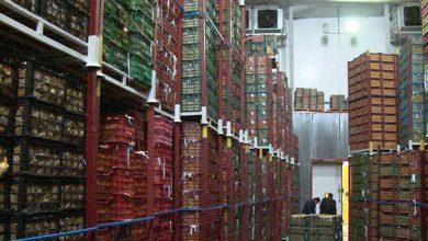 تصویر ظرفیت سردخانههای کشاورزی آذربایجانشرقی بیش از ۴۰۸ هزار تن است