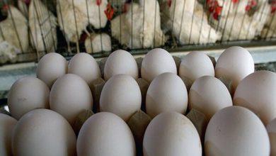 تصویر عرضه تخم مرغ بالاتر از شانه ای ۳۴ هزار تومان گرانفروشی است