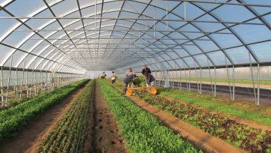 تصویر آذربایجانشرقی در توسعه گلخانهها رتبه نخست کشوری را دارد