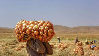تصویر تولید ۵ میلیون تن محصولات کشاورزی در آذربایجان شرقی