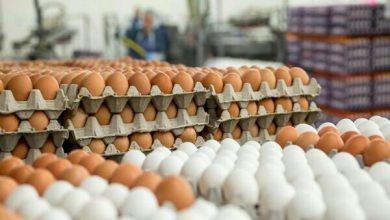 تصویر کاهش ۳۰۰۰ تومانی قیمت هر شانه تخم مرغ