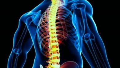 تصویر روش جدیدی برای بهبود پس از آسیب نخاعی