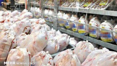 تصویر قیمت مرغ افزایش نخواهد داشت/ جوجه یک روزه ۴ هزار تومان