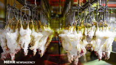 تصویر نگرانی برای تامین گوشت مرغ مورد نیاز ماه مبارک رمضان وجود ندارد