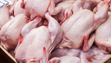 تصویر عرضه ۱۴۰۰ تُن مرغ گرم در تهران از امروز