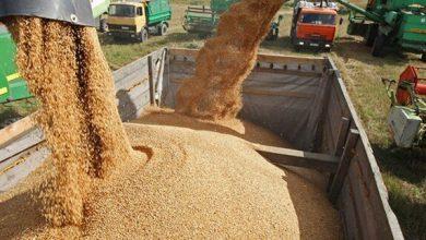 تصویر ۱.۴ میلیون تن گندم مازاد برمصرف کشاورزان در کشور خریداری شده است