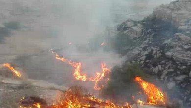 تصویر آتش سوزی در منطقه جنگلی پیرداود ورزقان مهار شد