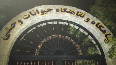 تصویر معاون خدمات شهری شهرداری اصفهان: