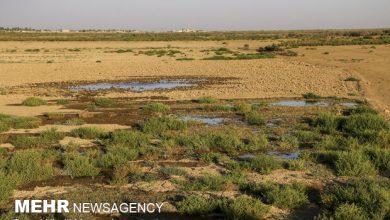 تصویر اختصاص ۲۰ هزار میلیارد ریال برای جبران خسارتهای خشکسالی