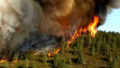 تصویر اطفای اولیه آتشسوزی جنگلهای ارسباران