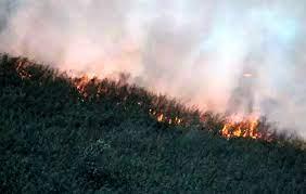 تصویر آتش همچنان بر جان تالاب زبانه میکشد/ اطفای حریق با کمک بالگرد