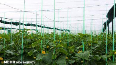 تصویر اتمام کامل زیرساختهای شهرک گلخانهای هوراند