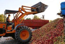 تصویر دپوی سیب اهر کنار جادهها/ سود اصلی به جیب دلالان میرود